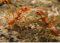 Get Rid of Fire Ants