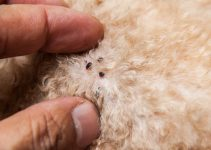 How to Get Rid of Fleas on Dogs Easily With Natural Ways
