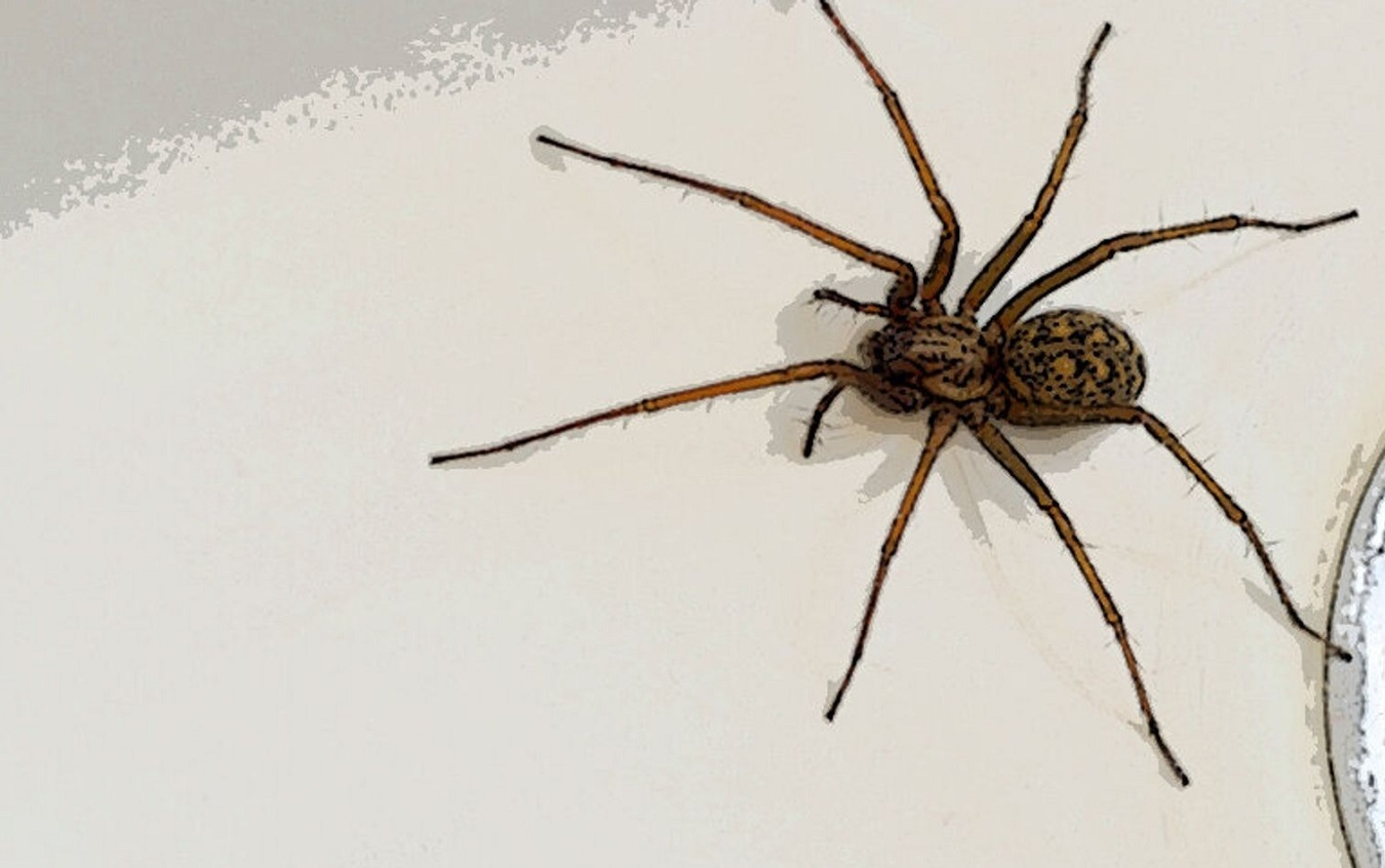 How to Get Rid of House Spiders