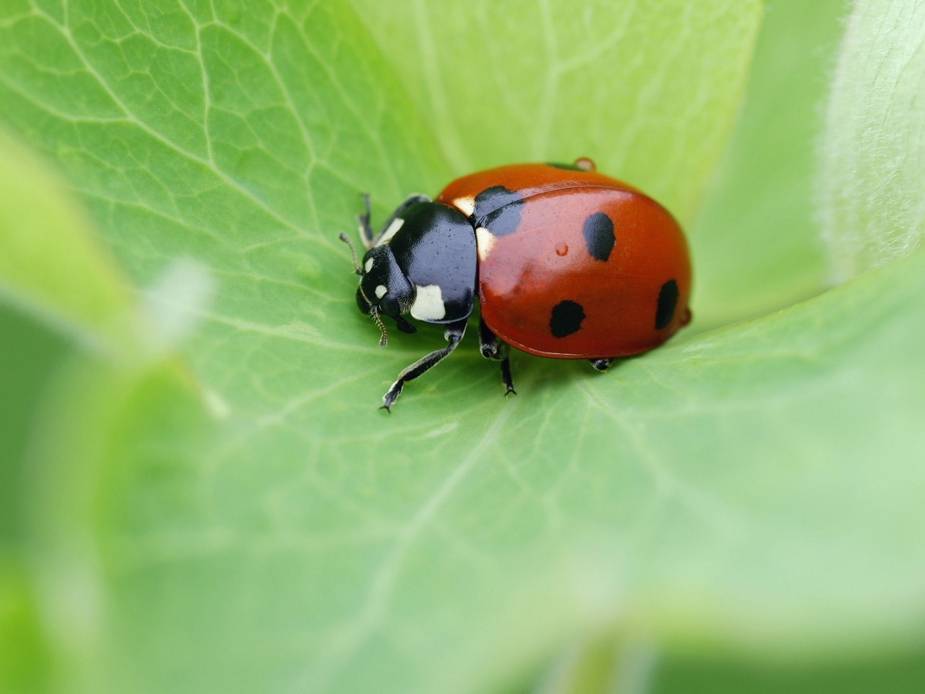 How to Get Rid of Ladybugs
