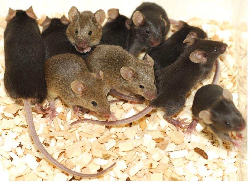 Repel the Mice