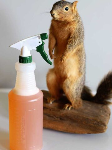 Chipmunks Smell Repellent
