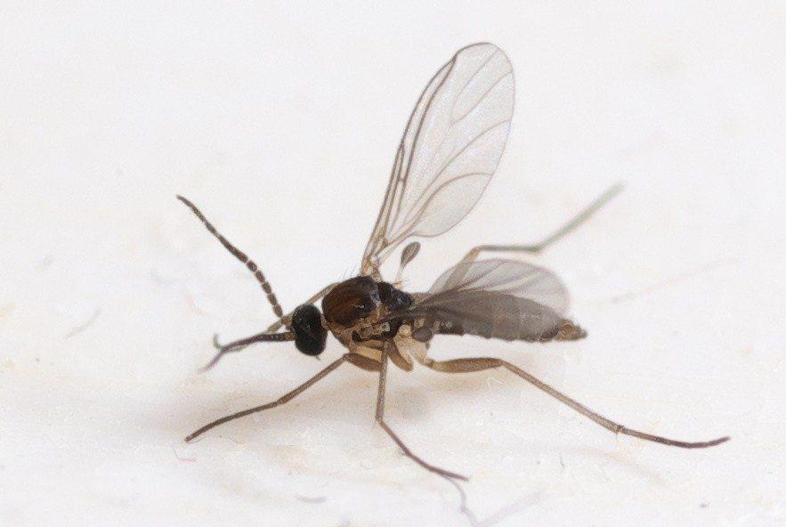 Gnats Prevention Methods