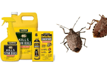 How to Get Rid of Stink Bugs Using Pesticide Products In Your House