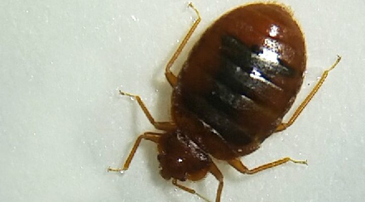Most Effective Bed Bug Treatments