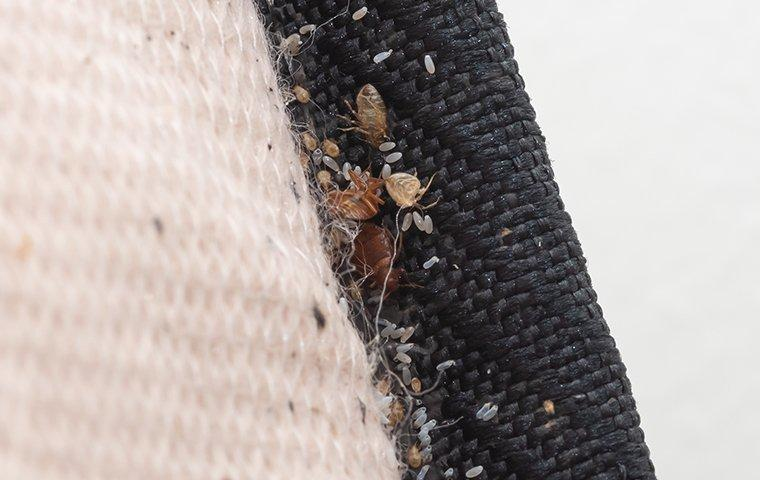 Signs of Bed Bugs In Home
