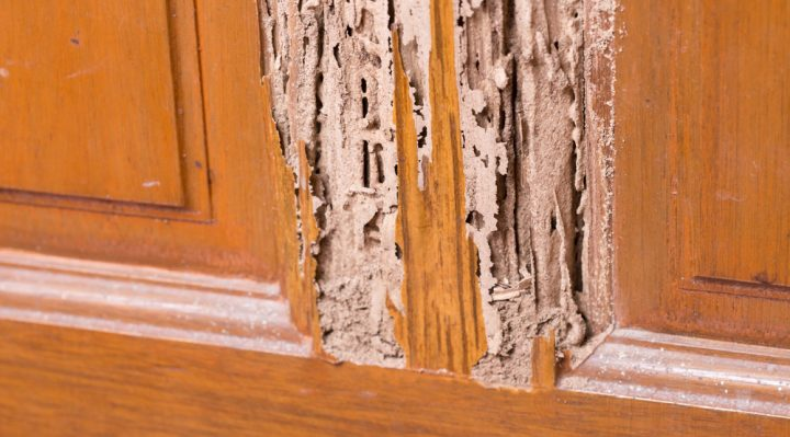Signs of Termite Infestation In House