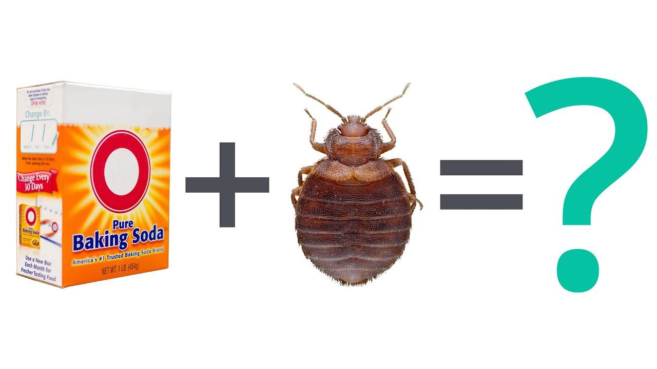 How to Use Baking Soda To Kill Bedbugs
