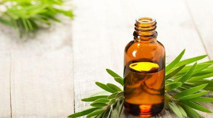 Tea Tree Essential Oils for bedbugs