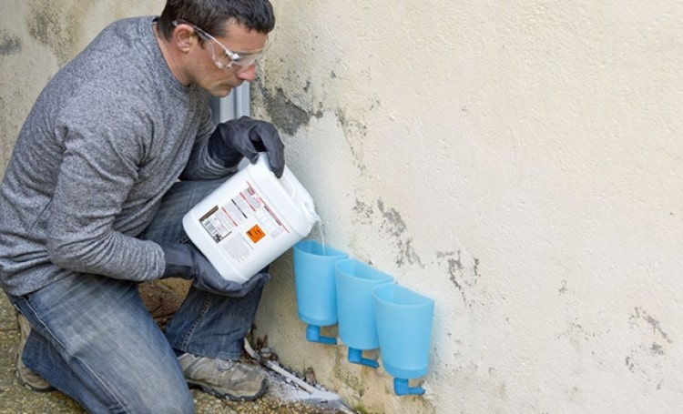 How Much Does Termite Control Cost