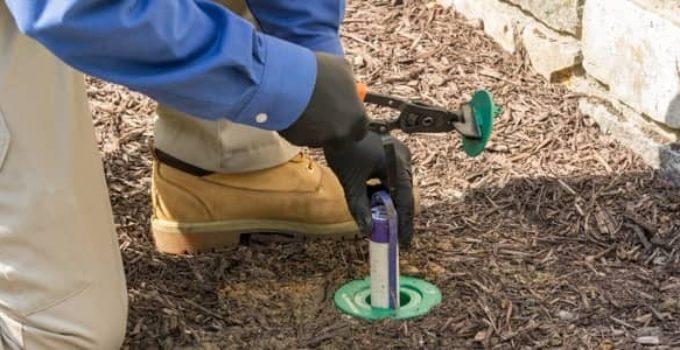 Termite Bait Stations vs Liquid Treatment
