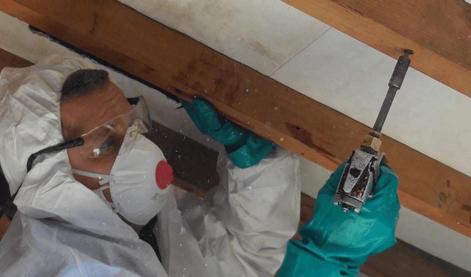 Termite Control Cost