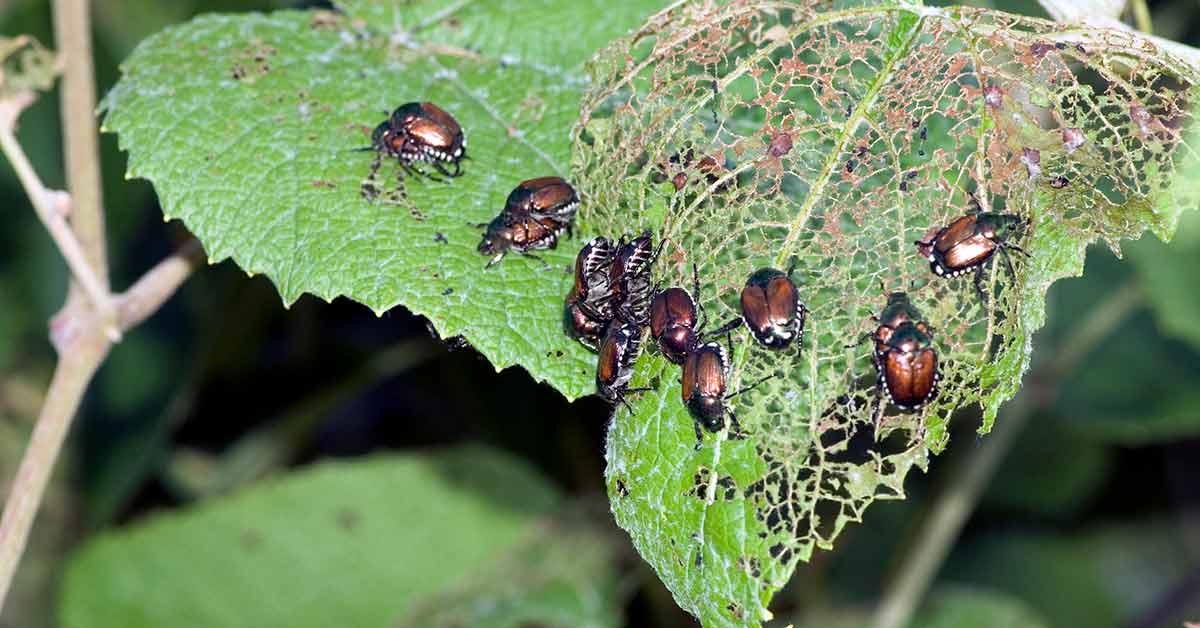 The Benefits of Integrated Pest Management (IPM)