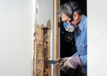 What are the Causes of Termite Infestation