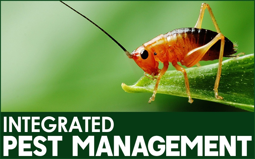 What is Integrated Pest Management